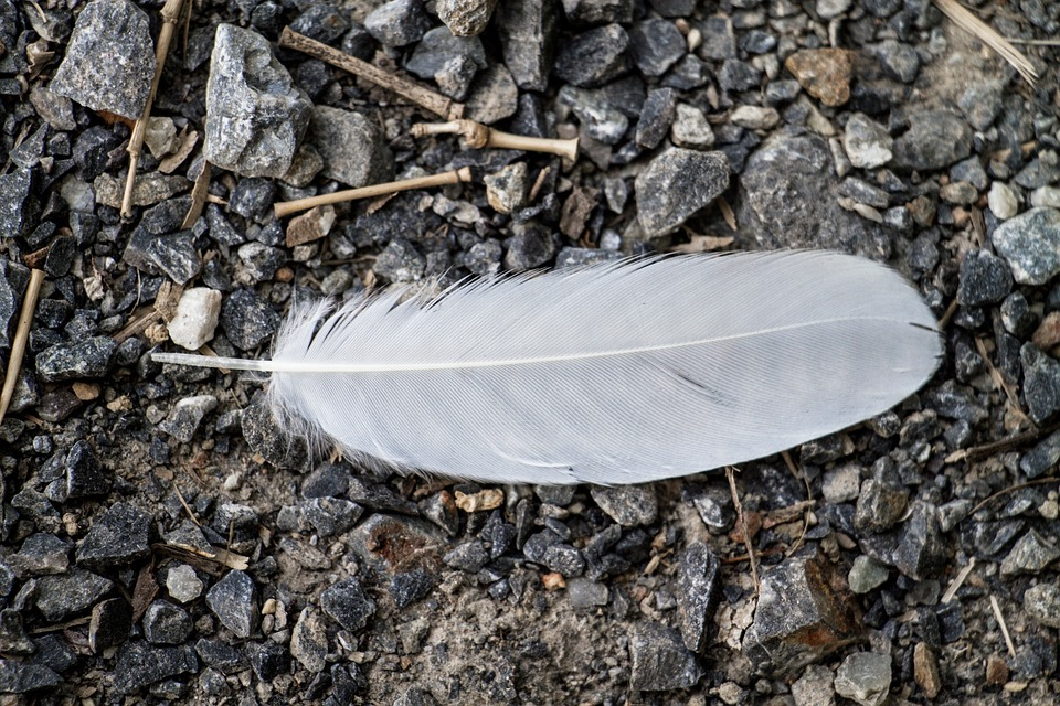 Birds-White-Feather-Feather-1014986