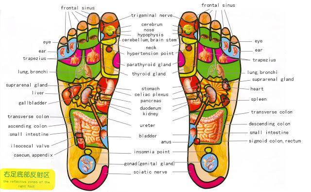 foot-reflexology-1