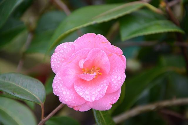 flower-3057481_640