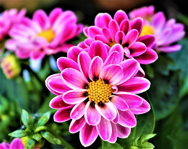 flowers-2995263_640