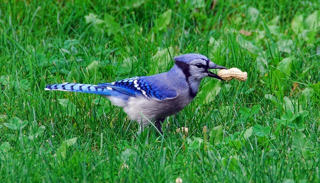 bird-2385629_640