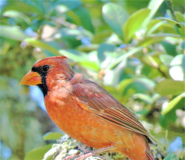 bird-2737430_640