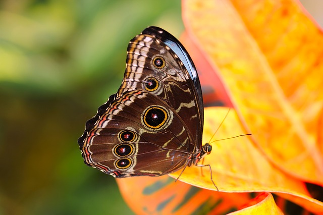 butterfly-3132257_640