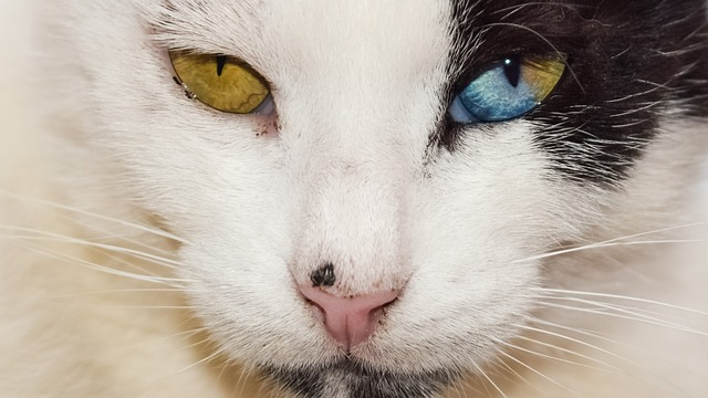 eyes-2344284_640