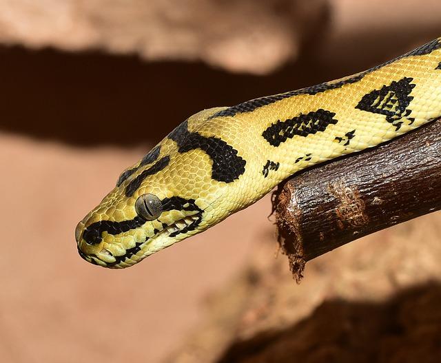 snake-3044000_640