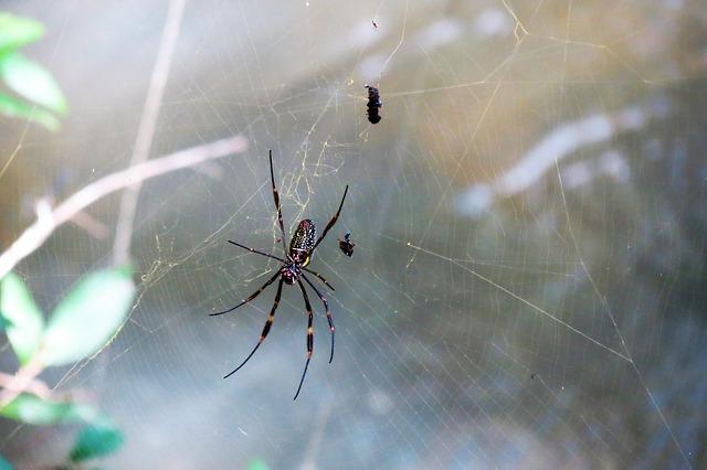 spider-3105892_640