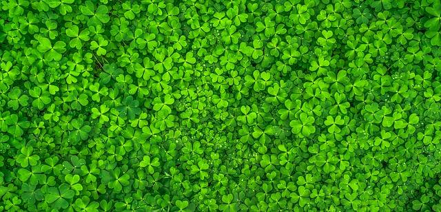 leaf-1482948_640