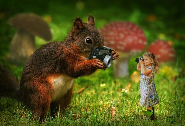 squirrel-3158846_640