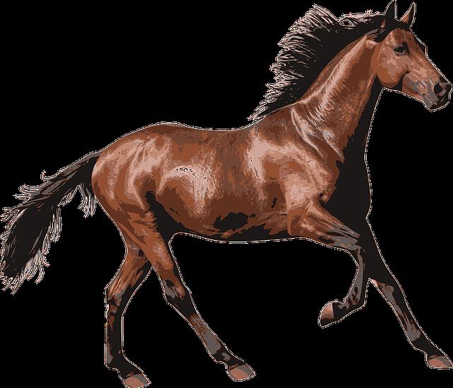 horse-1297225_640