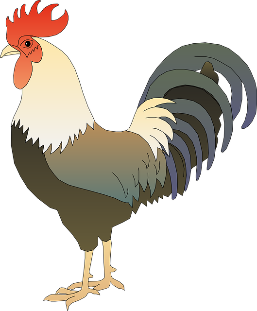 rooster-2029774_640