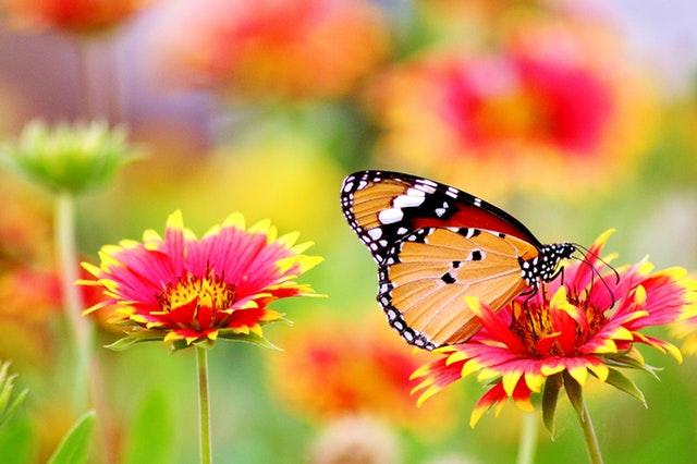 butterfly-flower-2