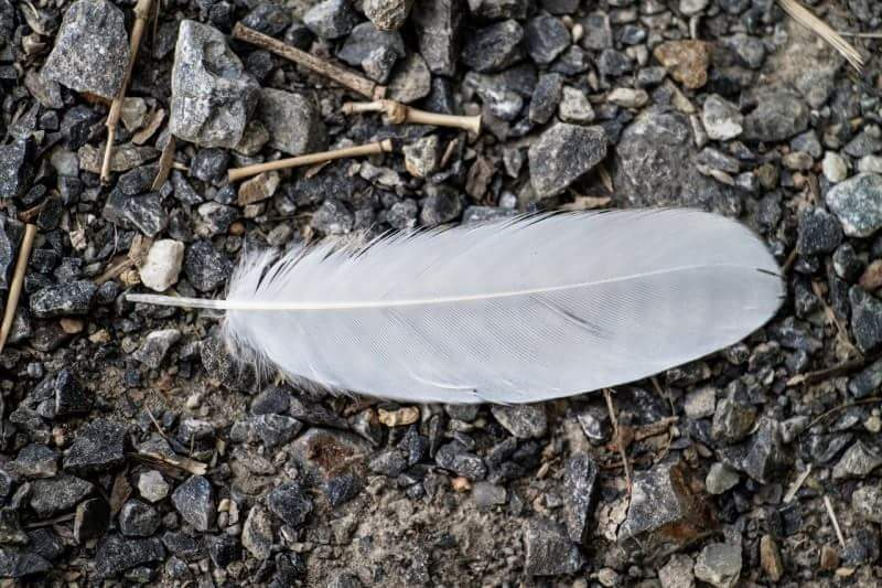 1feather