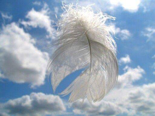 6feather