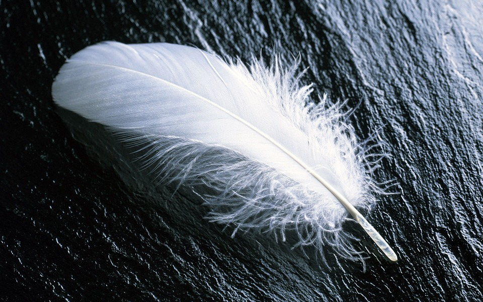 feather-967367_960_720