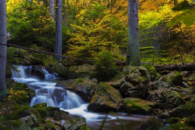 forest-bath-707915