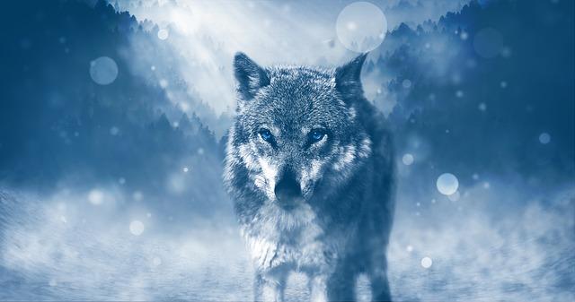 wolf-1836875_640