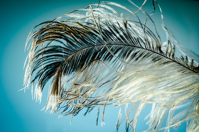 ostrich-feather-1457994_640