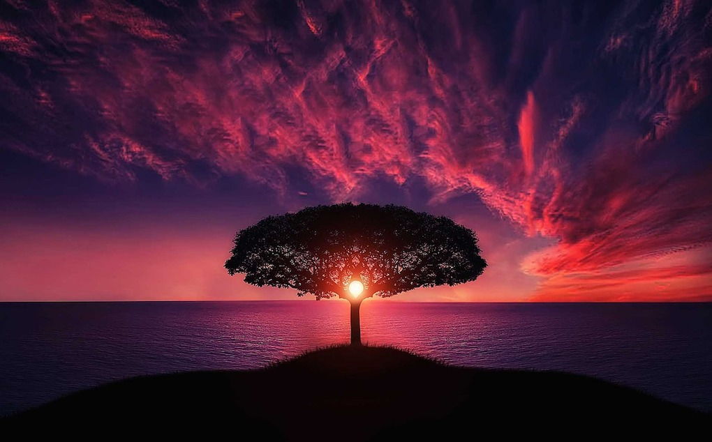 tree-736885_1280-1