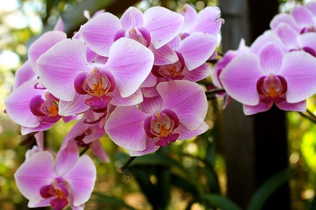 flowers-3757145_640