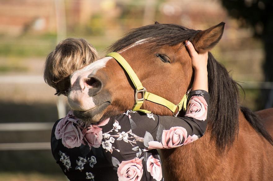horse-3712842_1280