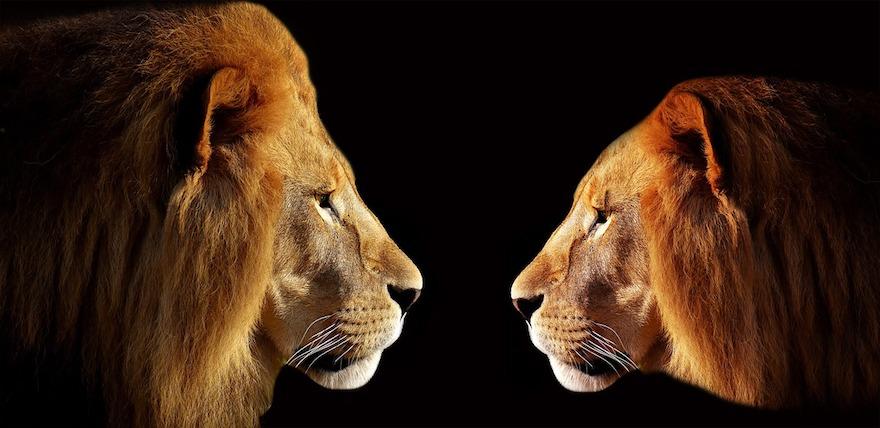 lion-3057316_1280-1