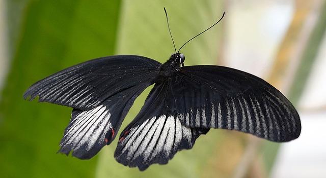butterfly-2869795_640