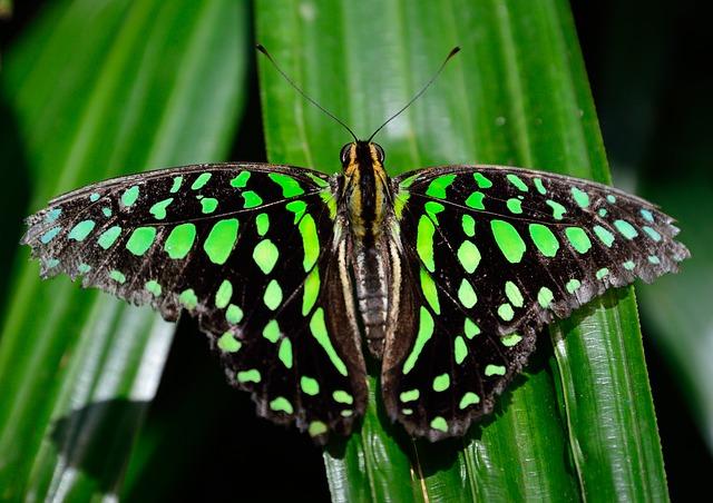 butterfly-339937_640