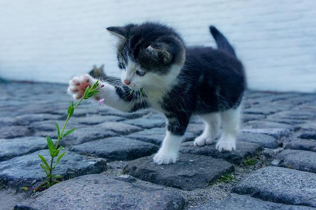 cat-2536662_640