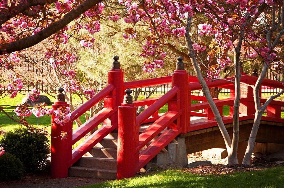 bridge-flowers--japon-1