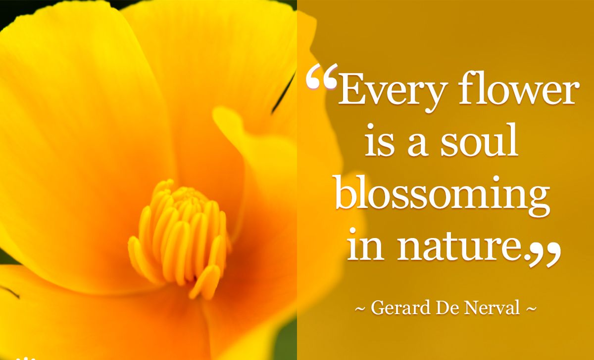 every-flower-is-a-soul-1