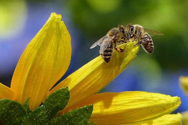 two-bees-yellow-small