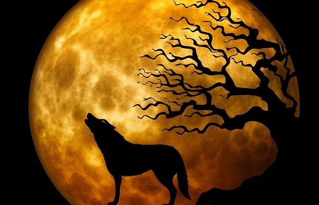 wolf-howling-at-moon-near-a-tree-at-nightjpg