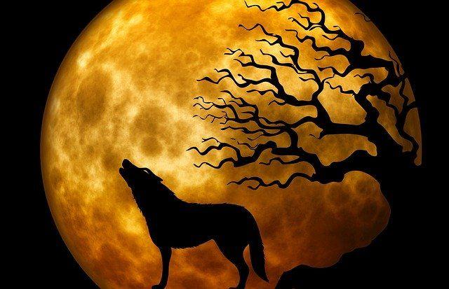 wolf-howling-at-moon-near-a-tree-at-nightjpg