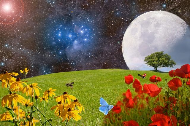 full-flower-moon-blossoming-field-small-2