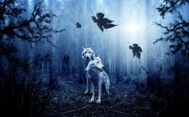 two-white-wolves-in-misty-woods_small-1