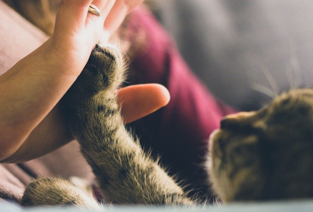 The Spirituality of Pets