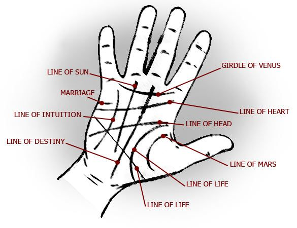 What Do the Lines on Your Palm Mean?