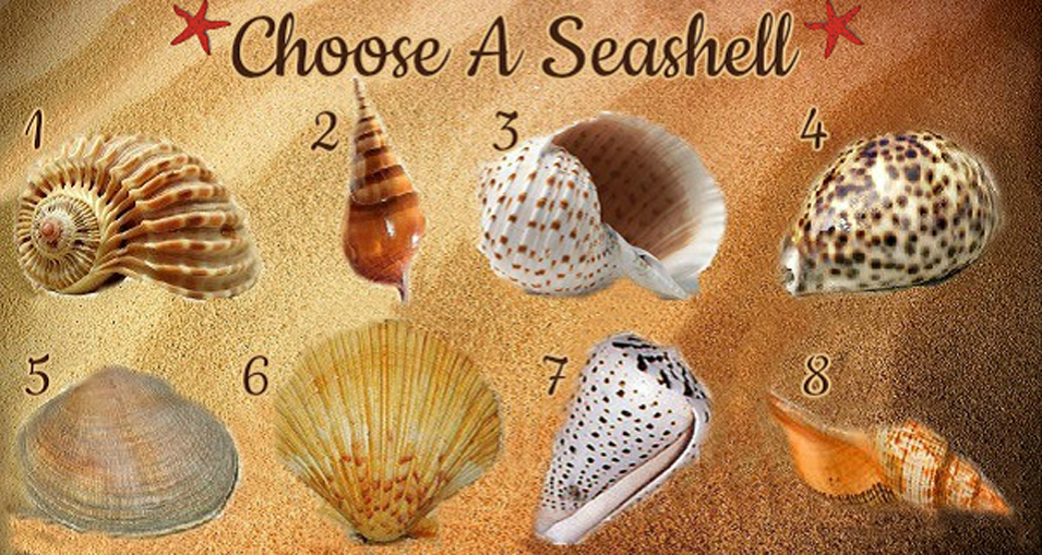 Select A Seashell And Uncover Your True Personality