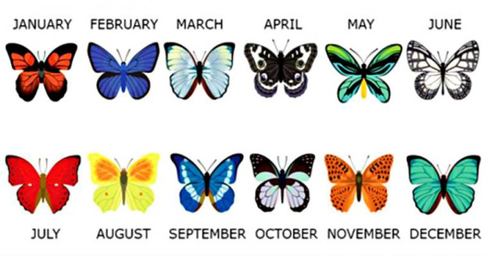 What Your Birth Month Butterfly Says About You