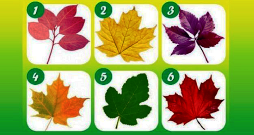 Pick Your Favorite Leaf To Reveal What Kind Of Person You Are