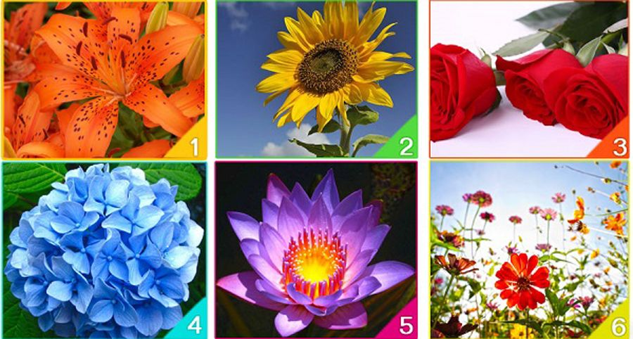 Which Flower Represents Your Spirit?