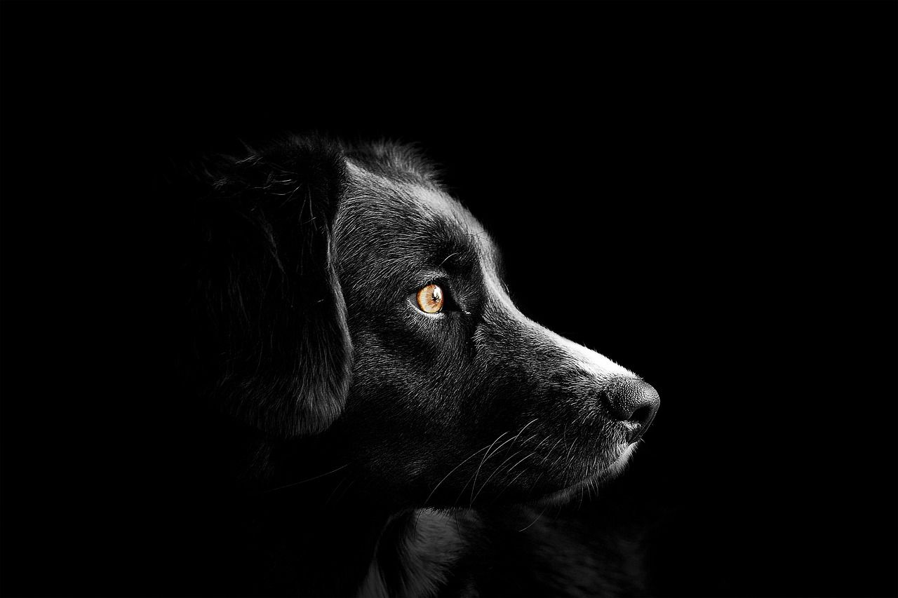 Can Dogs Sense Evil Spirits?