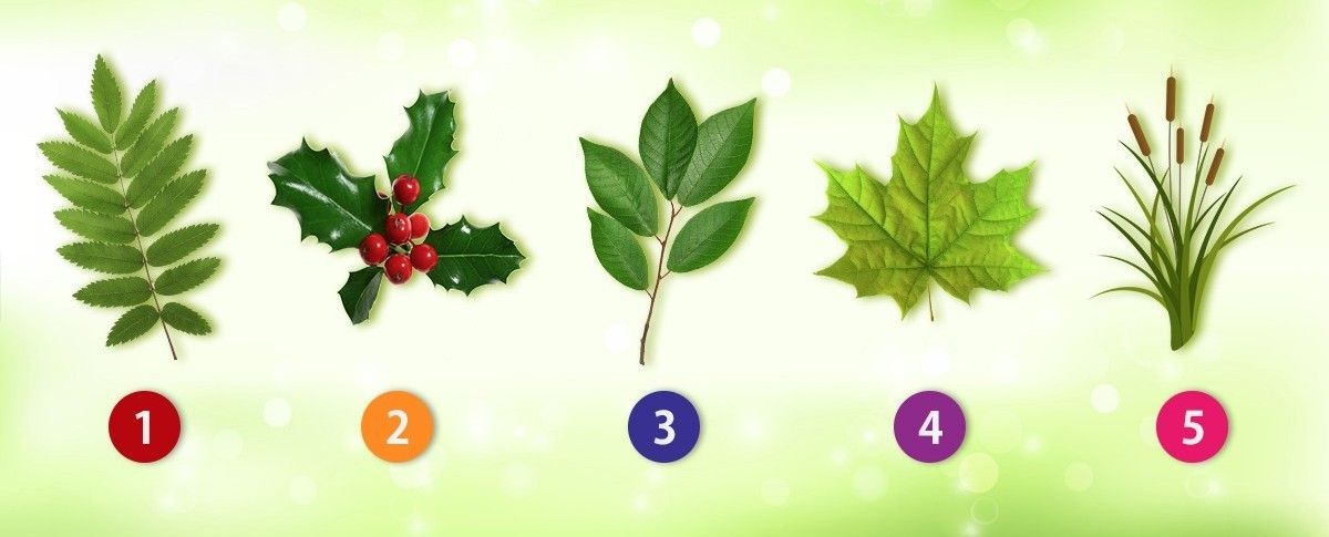 Which Leaf Do You Like The Most?