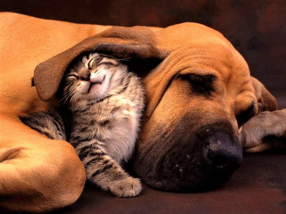 Why Having a Dog or Cat Has a Deep Spiritual Meaning