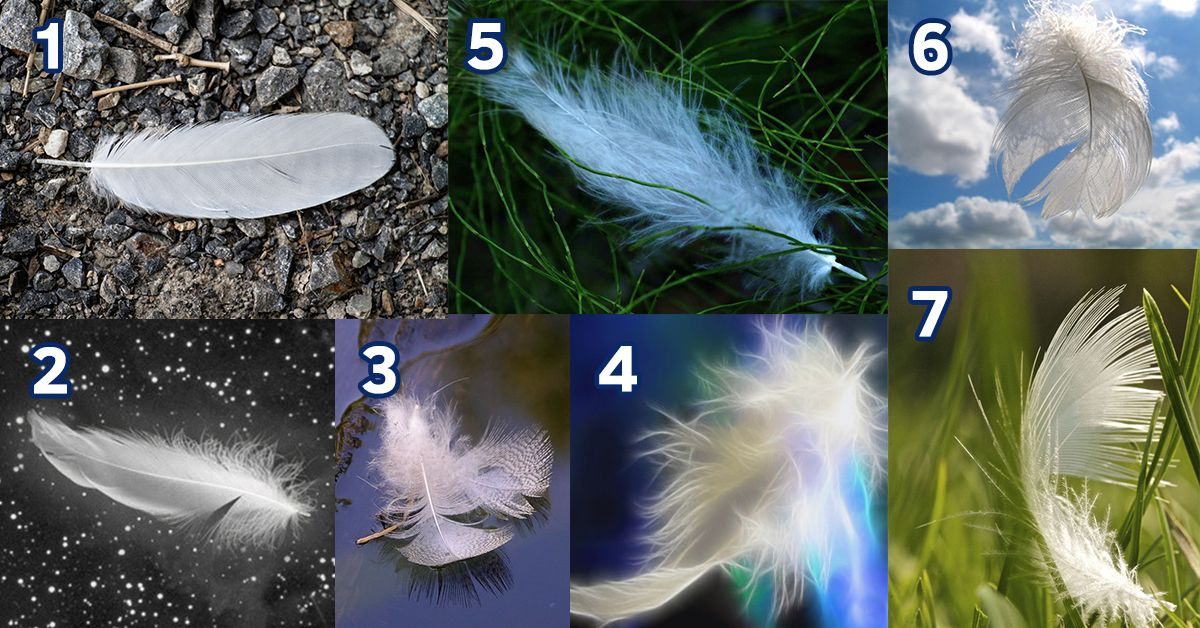 Pick an Angel Feather and Receive an Inspiring Message