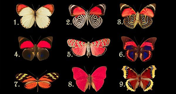 Select Your Favorite Butterfly And Discover What Feelings And Thoughts You Are Hiding