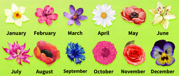 Personality Test, What Is Your Birth Flower?