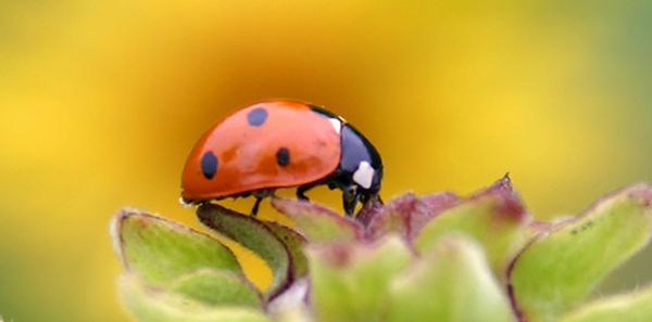 The Meaning of Ladybugs in Spirituality