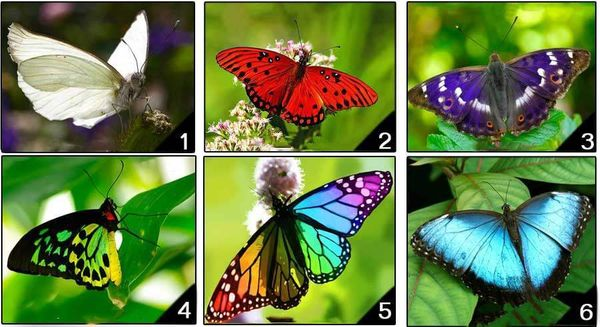 The Butterfly You Pick Reveals Your Personality